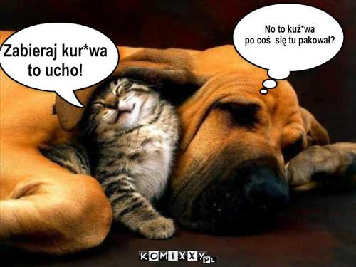 Kot Vs Pies Komiks Internetowy