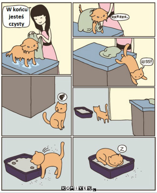 Kot –