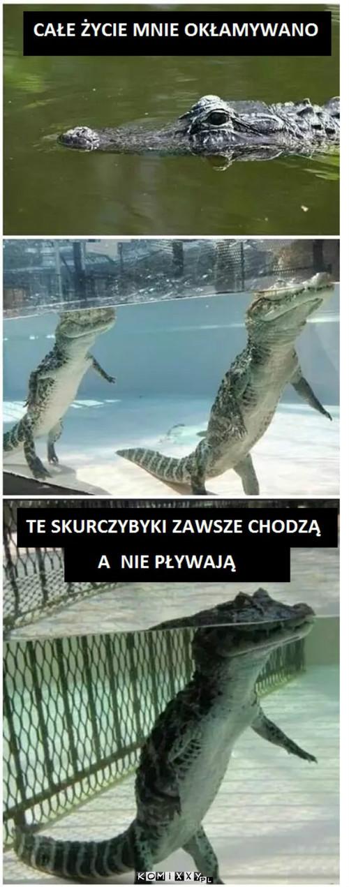 Krokodyle –