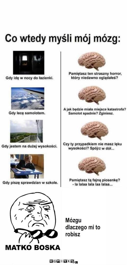 Mózg – Mózgu dlaczego mi to robisz