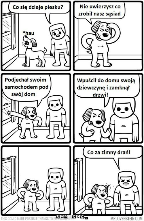 Psy widzą wszystko –