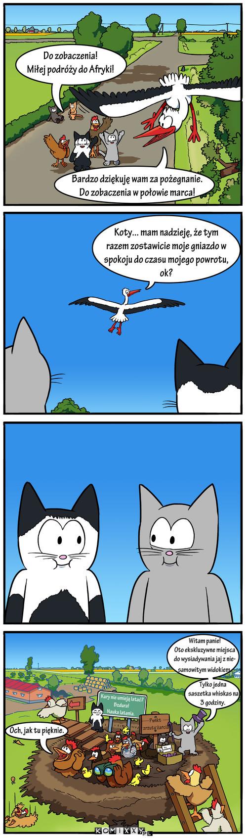 Gdy bocian odleci... –