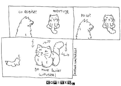 Nie wpuszaj kota –