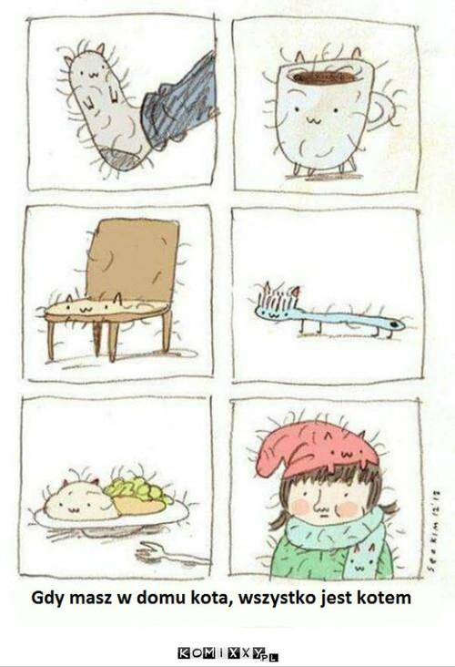 Kot w domu –